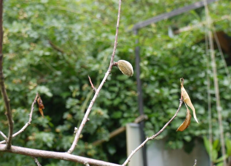 Trauriger g rtner opablog - Pfirsichbaum im garten ...