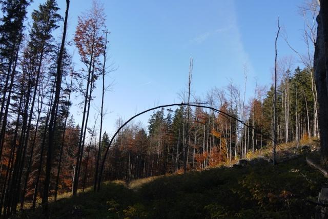 bäume 12