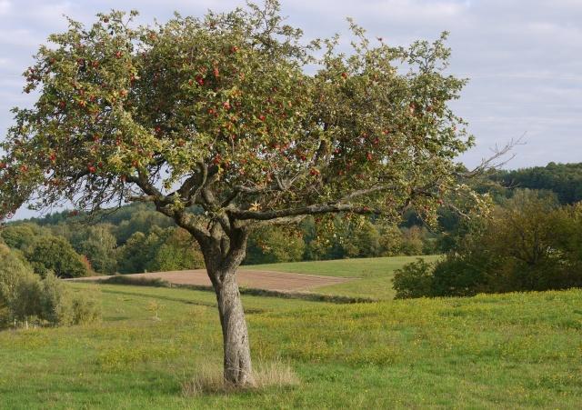 Bäume 5
