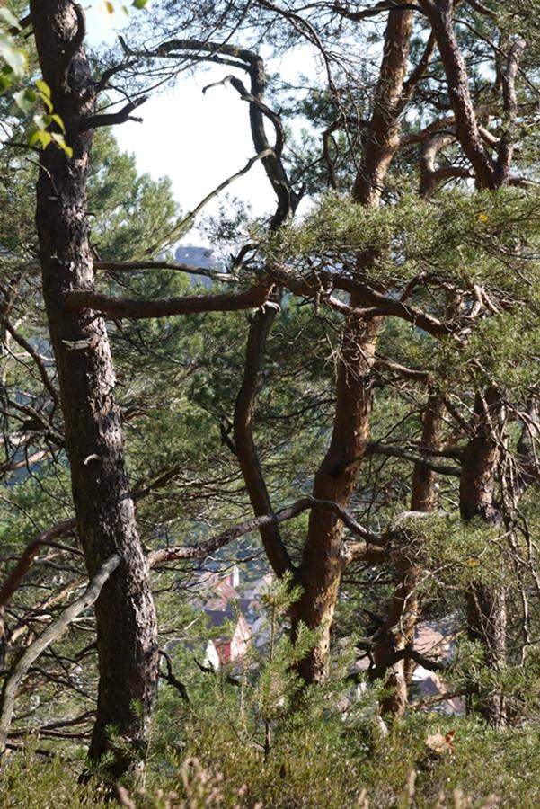 bäume 6