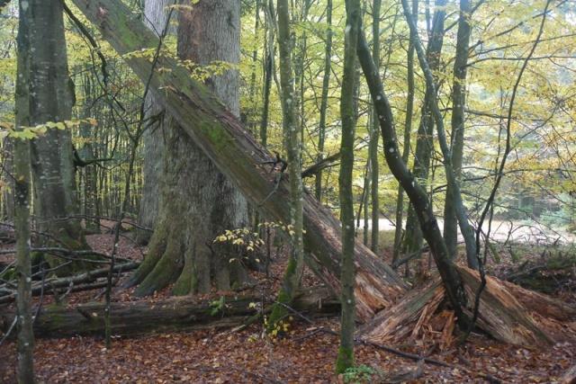 bäume 7