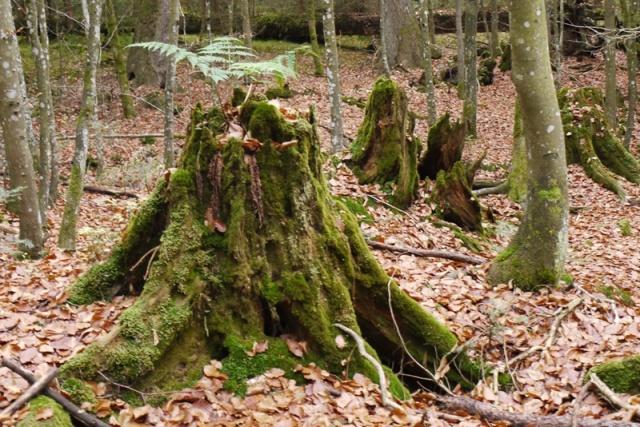 bäume 9